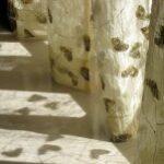 Rolety, závěsy nebo záclony? Jak esteticky a zároveň funkčně ozdobit okna