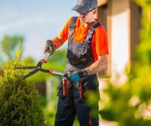 7 rad, jak správně zastřihnout živý plot