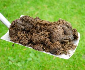 Jarní hnojení zahrady
